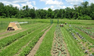farm rows 6-23-14a