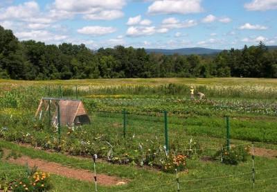 Farm Aug 2014